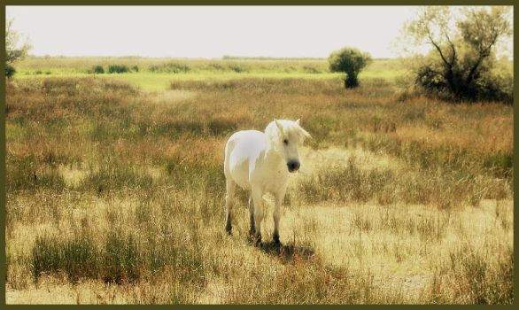 Into the Wild by Lorline
