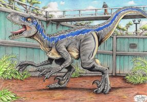 Jurassic World - Blue by Tadeu-Costa