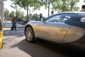 Veyron and photog by Valder137