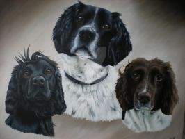 Ollie, Beau and Finn by petportraitman