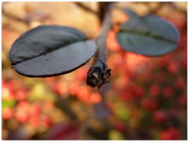 Like these autumn leaves by goudlokje
