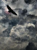 Vulture in the storm by Phaedris