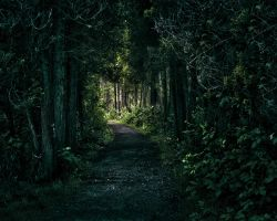 Path by rustwood