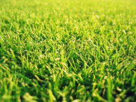 Grass Wallpaper by TheDhruv