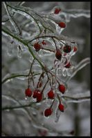 ice berries 2 by Nariane