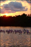 Spoonbills' Sunset by LadySilvie
