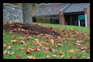 fall leaves by jus10tucker
