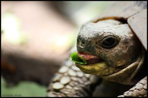 Turtle by Mokarta-Photo