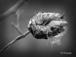 Summer's End by erbphotography
