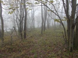 Woods And Fog by johnfboslet2001