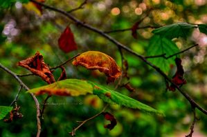 Greens and others..... by BrumColaco