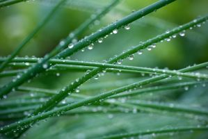 Wet grass wp by weirdfish2
