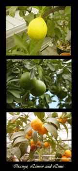 Oranges limes and lemons by... by Lemonclub