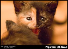 Paparazzi GO AWAY by KSPhotographic