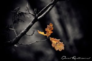 Autumn leaves.. by danniibooy