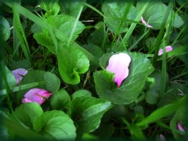 Petals in the Grass by oceanstarr