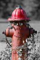 Kings Park Hydrant by parallaxadjustable