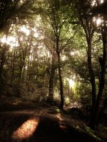 forest in sun by just-a-illusion