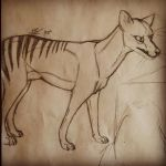Thylacine by Diniosaurus