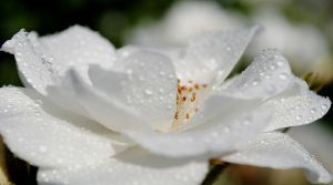White is for Magic by lumizet