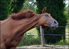 River - Stock 9 by Horses--Stock