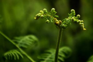Bold unfolding of Eagle Fern by steppeland