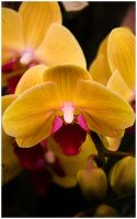 _orchidee by un-kno-wn