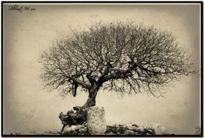 Wide tree - Monochrome by ShlomitMessica