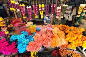 Indian Flora Stall - 3 by SAMLIM