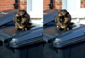 Impossible Affectionate Cat Stereoscopy by aegiandyad