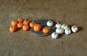 Micro Miniature Pumpkins - Orange and White by Kyle-Lefort
