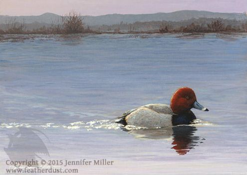 Early Morning - Redhead Duck by Nambroth