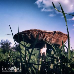 Mushroom 2045 by thepixelworks
