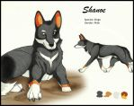 Shanoe - Character Design Competition by Nyrina