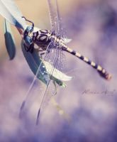 Dragonfly by Alessia-Izzo