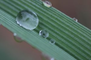 Droplets by TabithaS-Photography