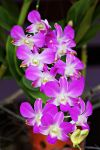 Orchid flowers 28 by a6-k