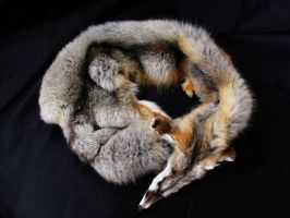 Kit fox pelt by WoroTax