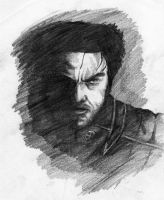 Wolverine Pencil sketch by JodyBriggs
