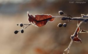 beautiful frosty winter day 6 by MT-Photografien
