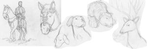 animals sketches by TheElysian