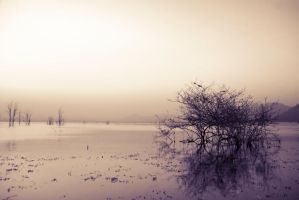 Sea of Tranquility I by Questavia