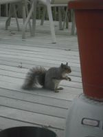 Squirrel: 4 by jr----fave-resources