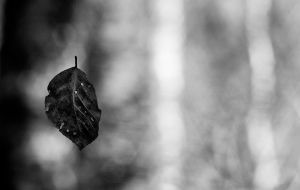 Autumn Leaves by tobiaswphoto