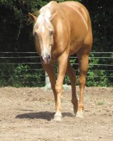 palomino stock four by love-letters-stock
