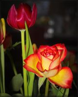 Rose_jm1059 by joergens-mi