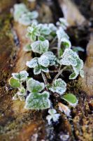 frost 3 - plant by kaykay1616