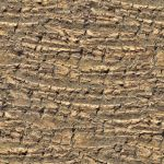 Tree bark palm tree seamless texture 2048x2048 by hhh316