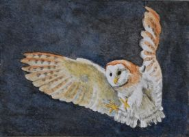 Barn Owl in Flight ATC by waughtercolors