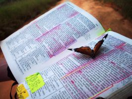 Butterfly on my Scriptures by crimsonsun1902
